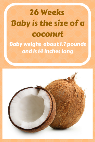 26 Weeks Baby is the size of a coconut