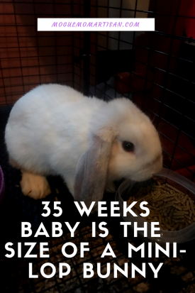 35 Weeksbaby is the Size of a Mini-Lop Bunny